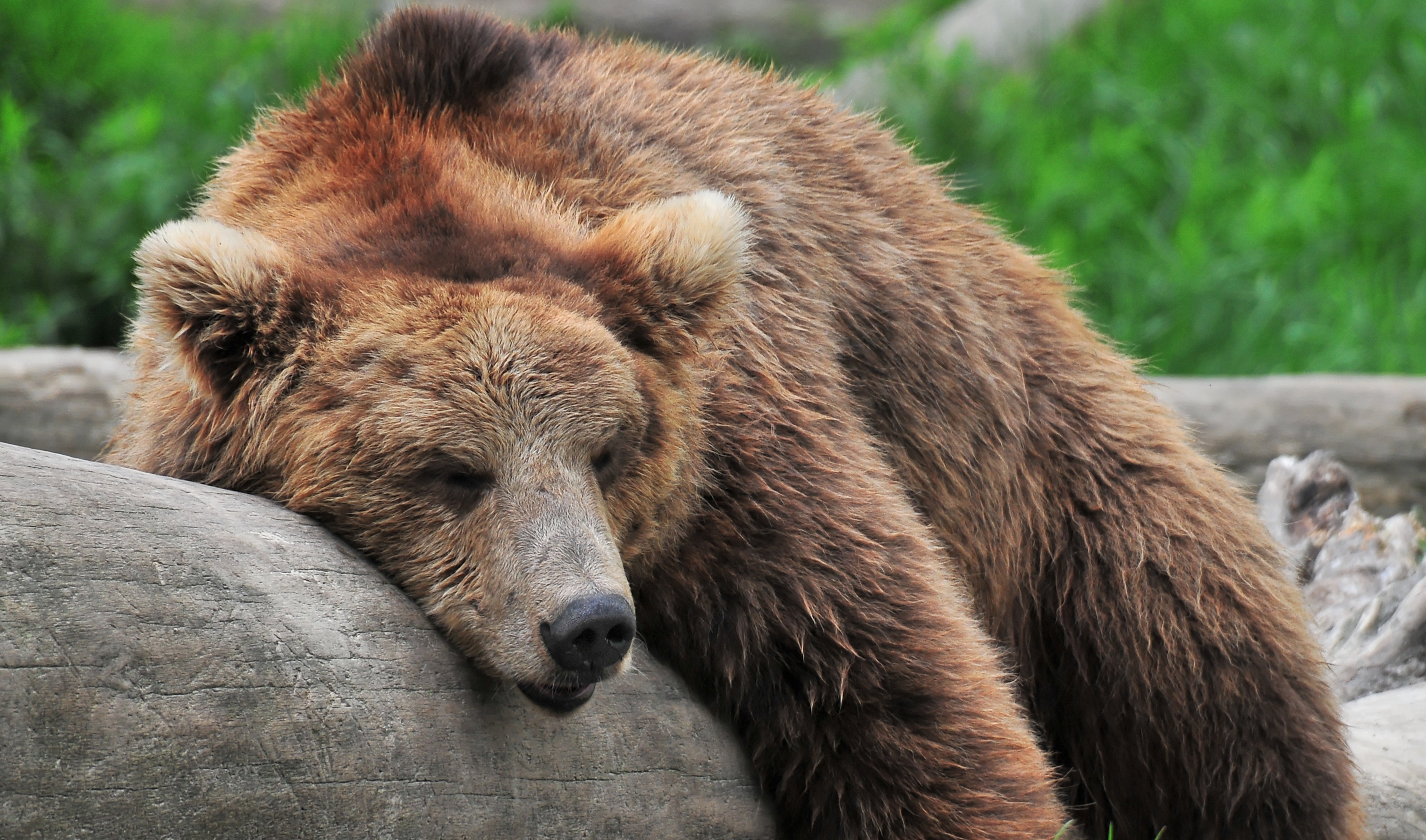 7 Animals with Amazing Sleep Habits