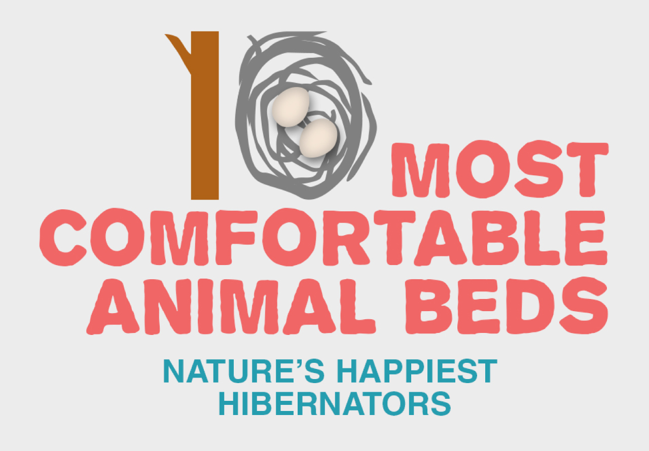 10 Most Comfortable Animal Beds
